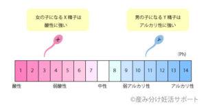 Ph値と精子の関係